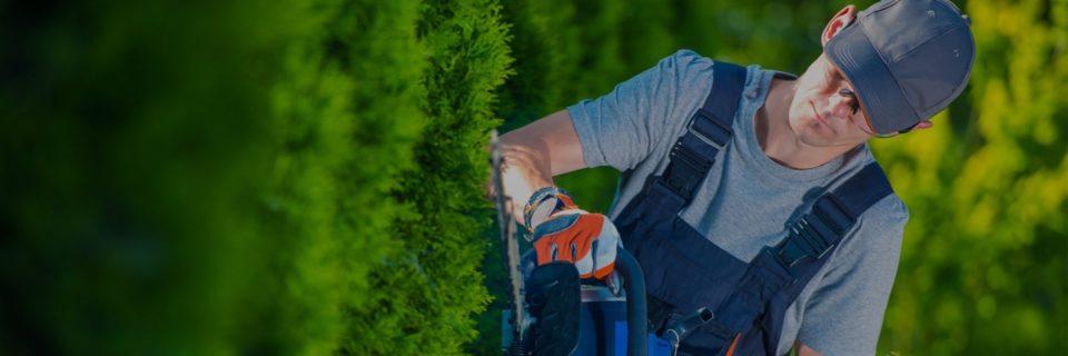 Ваш сад и газон будут выглядеть как надо